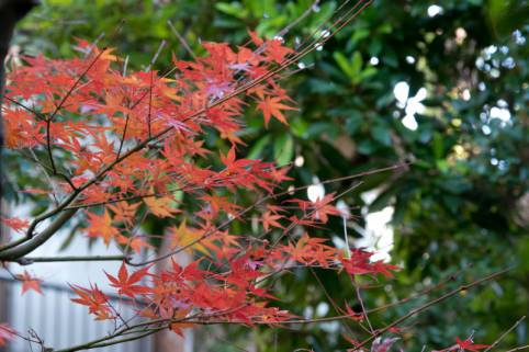 Garden Autumn leaves